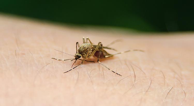 Mücke, Stich, Haut