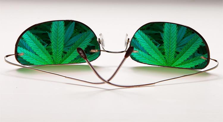 Brille, hanfpflanze in Brillenglaesern